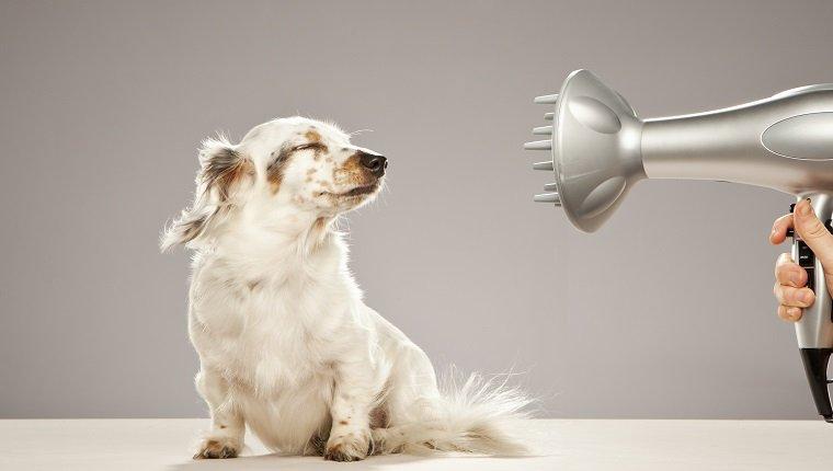 Haustierpflege